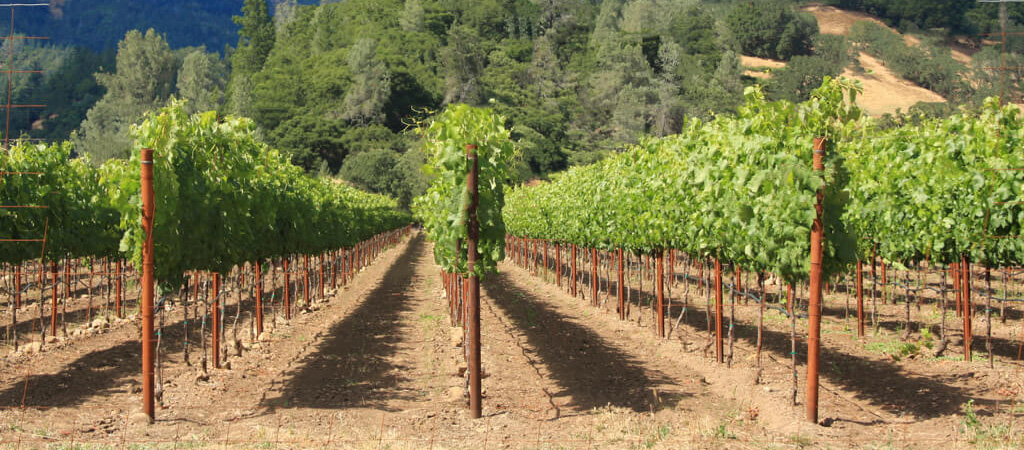 CALCLEAR for vineyards and orchards