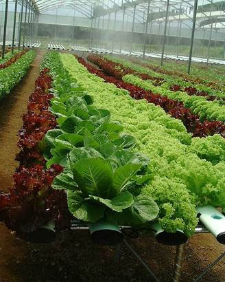 hydroponics use of calclear treated water